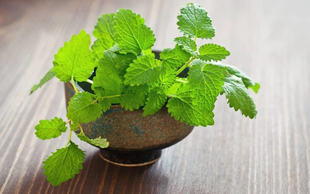 6 Household Uses for Mint