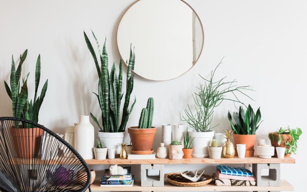 Check Out This TikToker's Impressive DIY Faux Plant Wall on a Budget