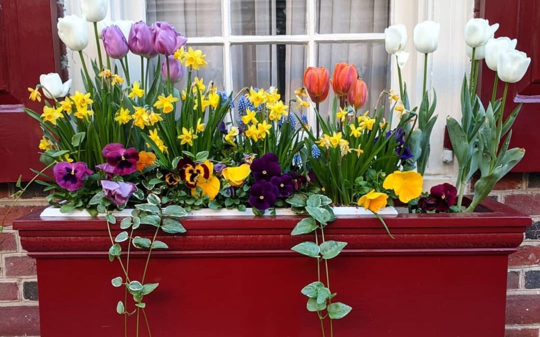 Embrace Summertime With the 24 Best Flowers for Window Boxes