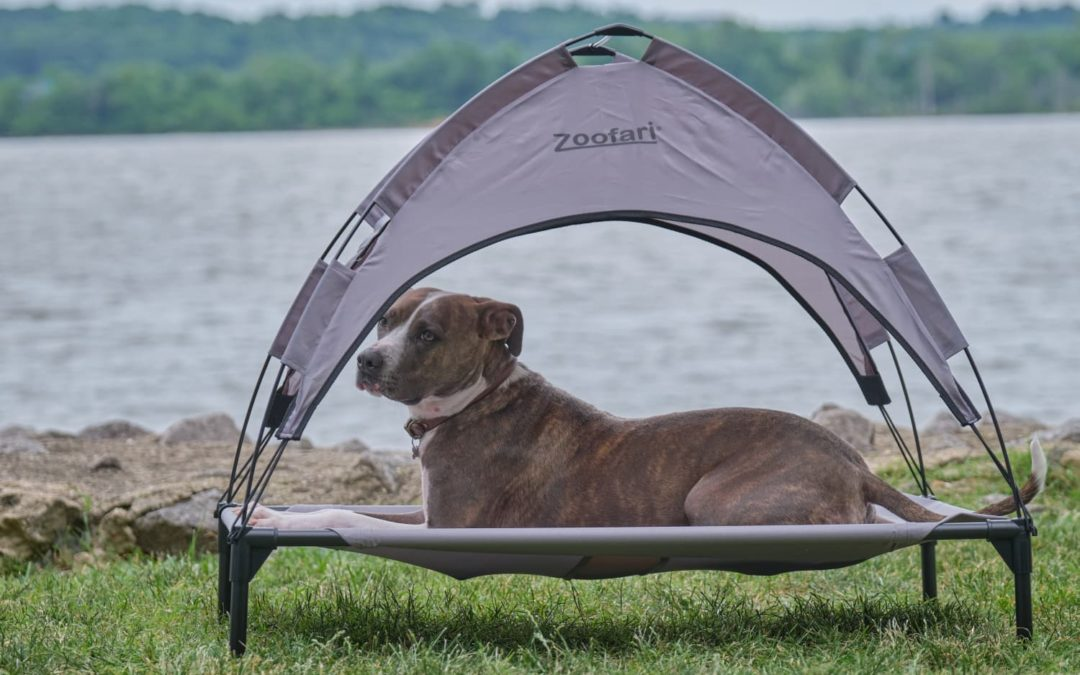 Lidl Has Brought Back Its $20 Dog Canopy Bed So Your Pup Can Enjoy Summer In Style