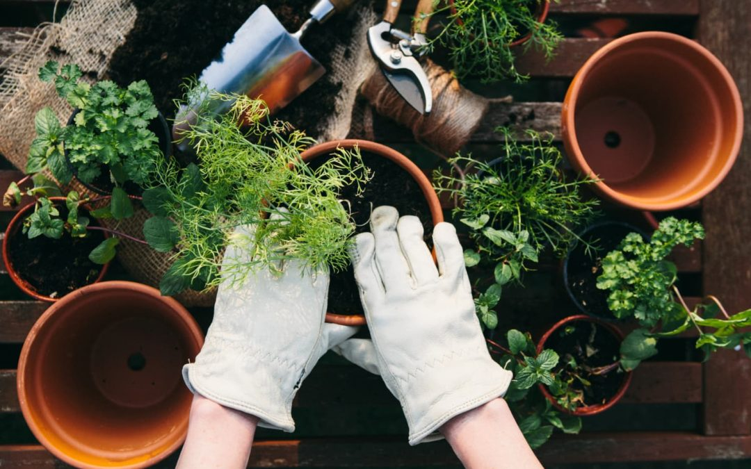 These Cities Are the Gardening Capitals in the U.S., According to Instagram