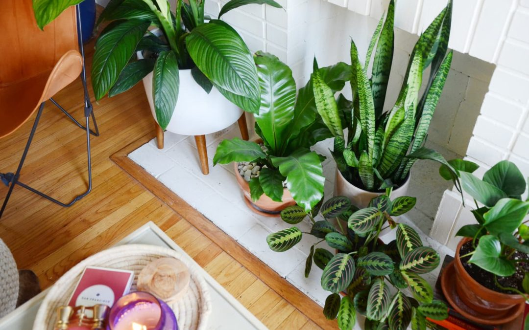 These IKEA Cabinets Make Surprisingly Good Greenhouses for Your Plants