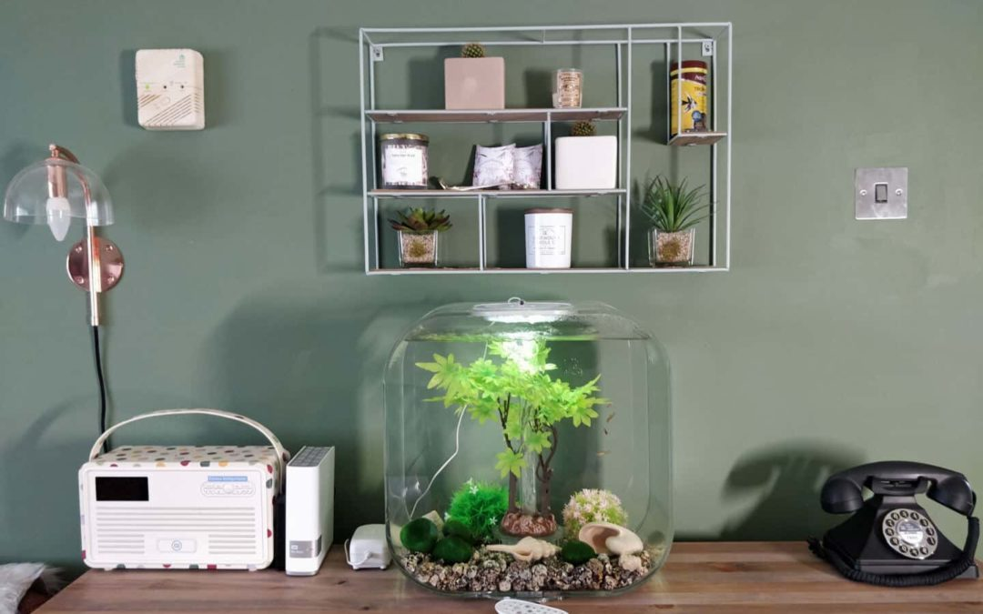 biOrb Fish Tank Review : A Stylish And Affordable Aquarium For Design Lovers