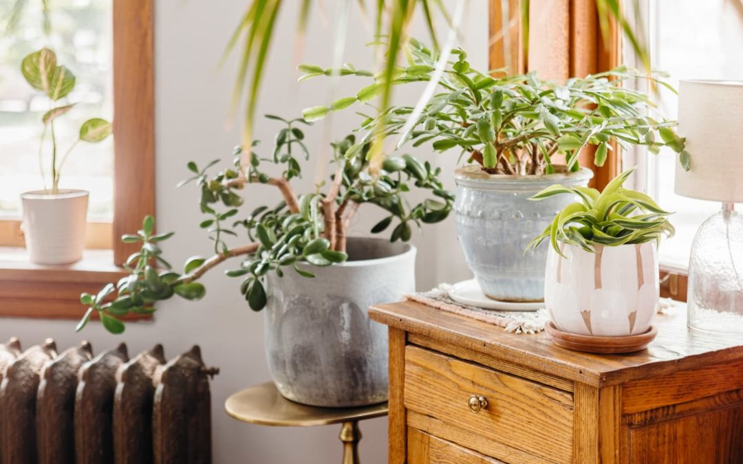 This Company Is Offering Plant Insurance for People Who Don't Trust Their Gardening Skills