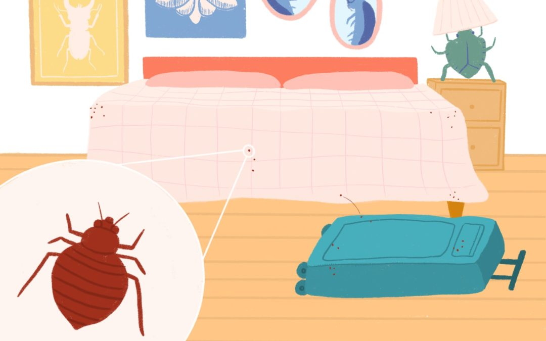 7 Lessons I Learned After Pests Invaded My New Apartment