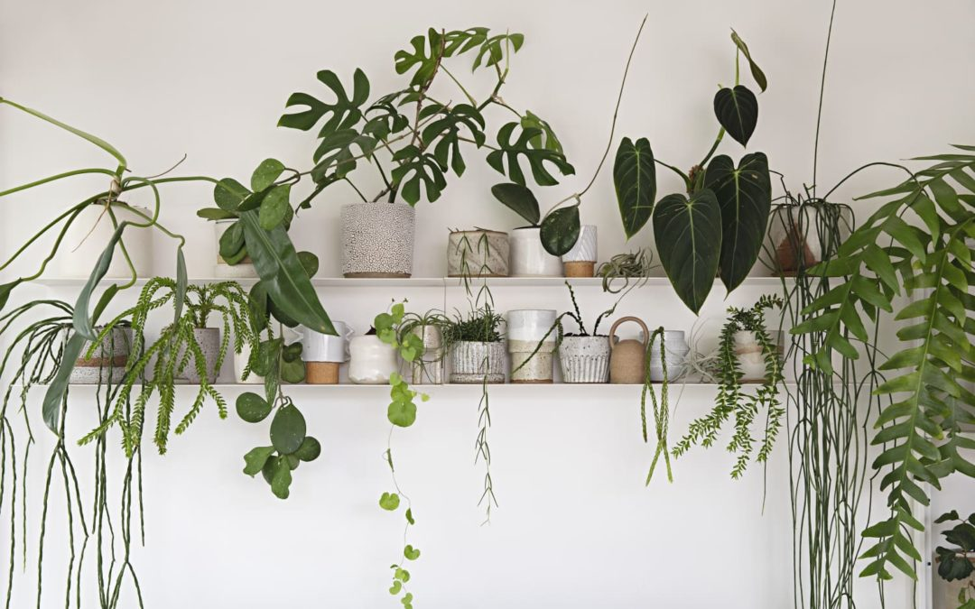 These Are 2021's Most Popular Houseplants, According to Instagram