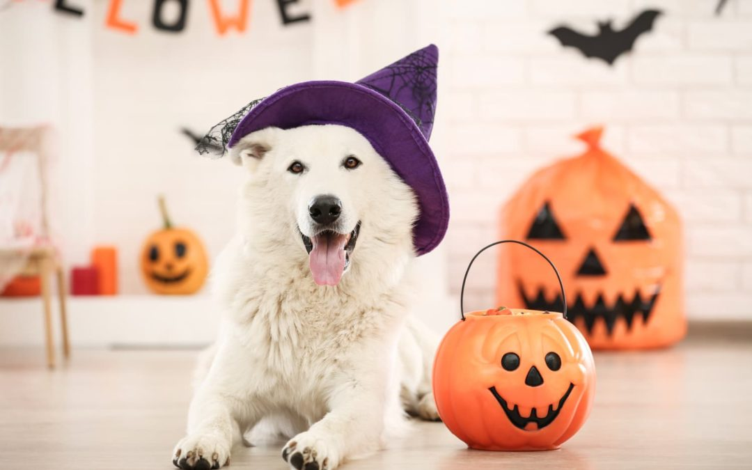 These Are the Most Popular Pet Halloween Costumes in the U.S.